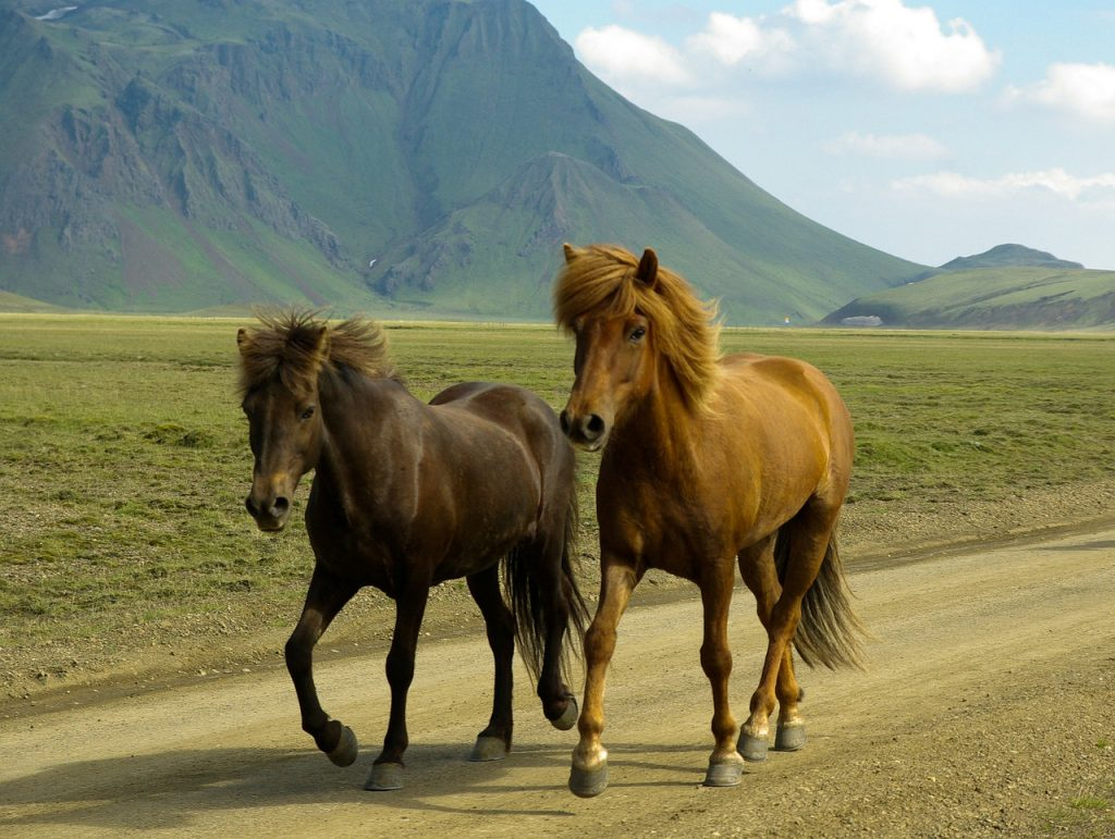 horse riding in Iceland, personalized road trip plan